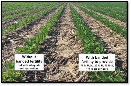 yound soybean with and without banded fertilizer