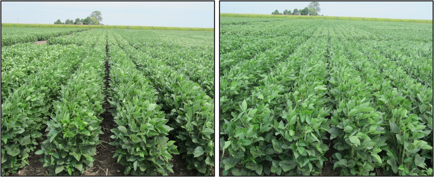 Narrow soybean rows promote canopy closure