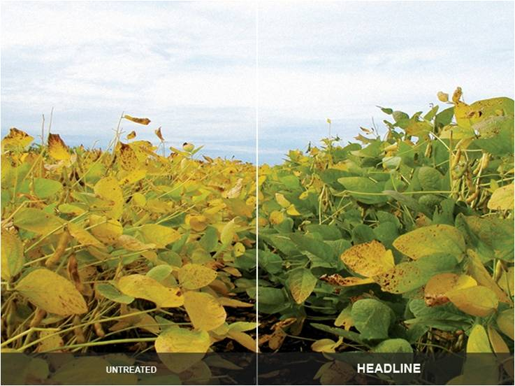 Soybean_fungicide_response