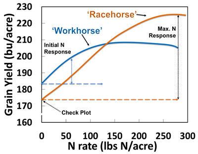 racehorses have greater yield response to small amounts of N fertilizer